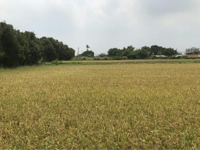 楊梅漂亮農地861,桃園市楊梅區楊湖段
