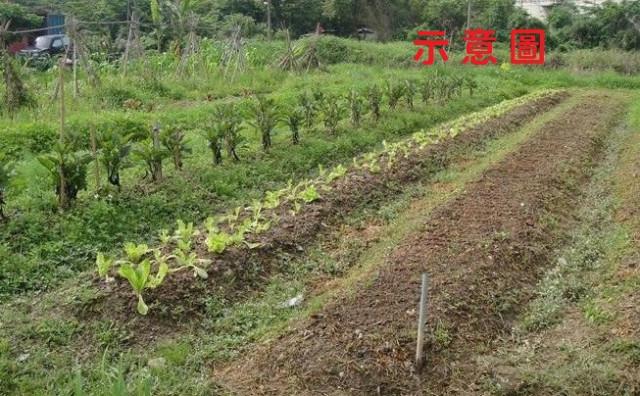 省道旁小坪數農+建,桃園市楊梅區牲牲段